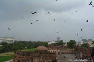 Phariah kites circling in the sky